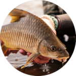Niger Barb Fly Fishing Africa